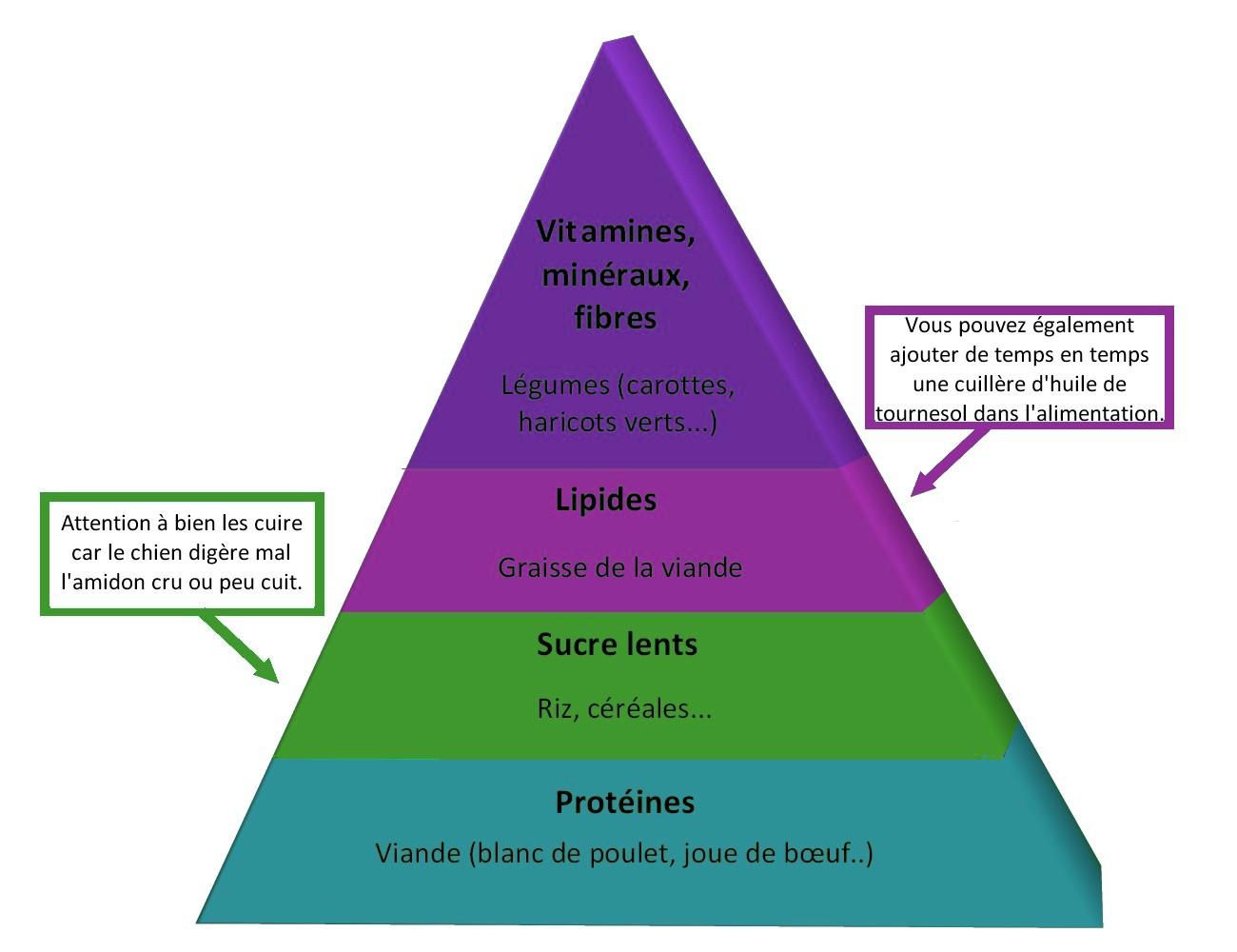 les besoins nutritionnels de la femme enceinte pdf